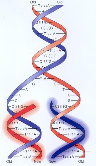 Ensayos Sobre La Ciencia De La Genética Prof Antonio